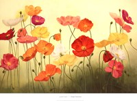 Sunlit Poppies Fine-Art Print