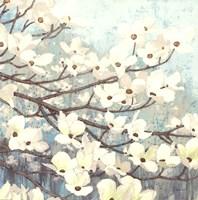 Dogwood Blossoms II Fine-Art Print