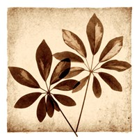 Cassava Leaves Fine-Art Print