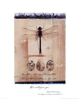 Dragon Fly Fine-Art Print