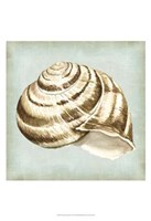 Sea Dream Shells I Fine-Art Print
