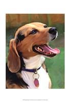 Beagle-Beagle Fine-Art Print