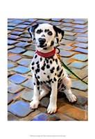 Dalmatian Puppy Fine-Art Print