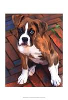 Baby Boxer Fine-Art Print