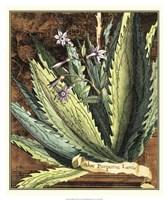 Graphic Aloe II Fine-Art Print