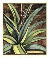 Graphic Aloe III Fine-Art Print