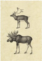 Vintage Elk Fine-Art Print