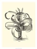 B&W Besler Aloe Fine-Art Print