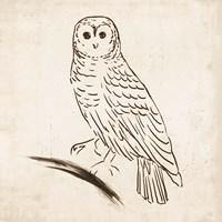 Owl I Fine-Art Print