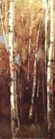 Birch Forest II - Mini Fine-Art Print