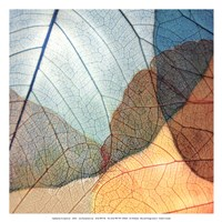 Blue and Orange Leaves II Fine-Art Print