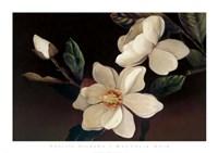 Magnolia Noir Fine-Art Print