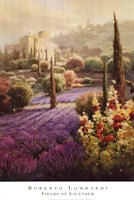 Fields of Lavender Fine-Art Print