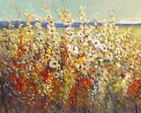 Field of Spring Flowers II Fine-Art Print