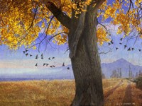 Yellow Cottonwood Fine-Art Print