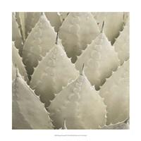 Organic Elements VII Fine-Art Print