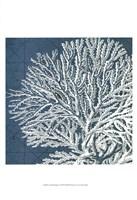 Coastal Menagerie I Fine-Art Print