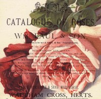 Roses II Fine-Art Print
