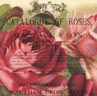 Roses IV Fine-Art Print