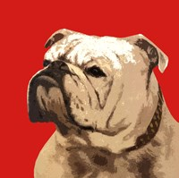 The British Bulldog, Red Fine-Art Print