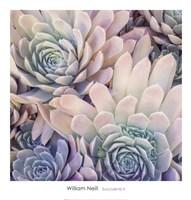 Succulents II Fine-Art Print
