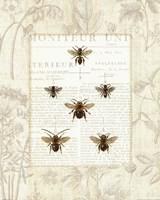 Bee Botanical Fine-Art Print