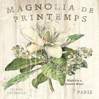 Magnolia de Printemps Fine-Art Print