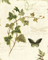Ivies and Ferns IV Fine-Art Print