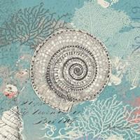 Shells on Aqua Fine-Art Print