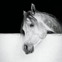 Lonesome Gray Fine-Art Print
