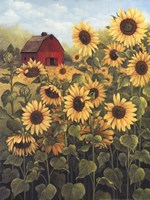 Field of Sunflowers Fine-Art Print