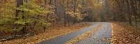Road passing through autumn forest, Great Smoky Mountains National Park, Cherokee, North Carolina, USA Fine-Art Print