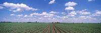 Cornfield, Marion County, Illinois, USA Fine-Art Print