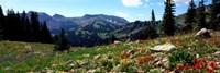 Wildflowers in a field, Rendezvous Mountain, Teton Range, Grand Teton National Park, Wyoming, USA Fine-Art Print