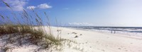 Tall grass on the beach, Perdido Key Area, Gulf Islands National Seashore, Pensacola, Florida, USA Fine-Art Print