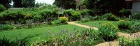 USA, Virginia, Williamsburg, colonial garden Fine-Art Print
