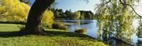 Willow Tree By A Lake, Green Lake, Seattle, Washington State, USA Fine-Art Print
