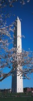 Cherry Blossom in front of an obelisk, Washington Monument, Washington DC, USA Fine-Art Print