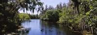 River passing through a forest, Hillsborough River, Lettuce Lake Park, Tampa, Hillsborough County, Florida, USA Fine-Art Print
