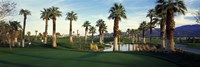 Palm trees in a golf course, Desert Springs Golf Course, Palm Springs, Riverside County, California, USA Fine-Art Print