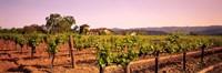 Sattui Winery, Napa Valley, California, USA Fine-Art Print