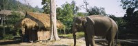 Elephant standing outside a hut in a village, Chiang Mai, Thailand Fine-Art Print