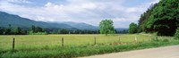 Road Along A Grass Field, Cades Cove, Great Smoky Mountains National Park, Tennessee, USA Fine-Art Print
