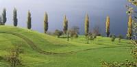 Switzerland, Lake Zug, View of a row of Poplar Trees Fine-Art Print