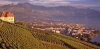 Vineyard at a hillside, Lake Geneva, Vevey, Vaud, Switzerland Fine-Art Print