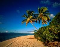 Palm trees and beach, Tahiti French Polynesia Fine-Art Print
