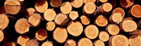 Logs Fine-Art Print