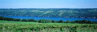 Vineyard with a lake in the background, Keuka Lake, Finger Lakes, New York State, USA Fine-Art Print