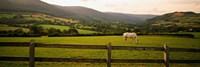 Horse in a field, Enniskerry, County Wicklow, Republic Of Ireland Fine-Art Print