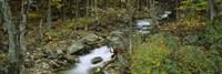 Stream through the Forest, New Hampshire Fine-Art Print